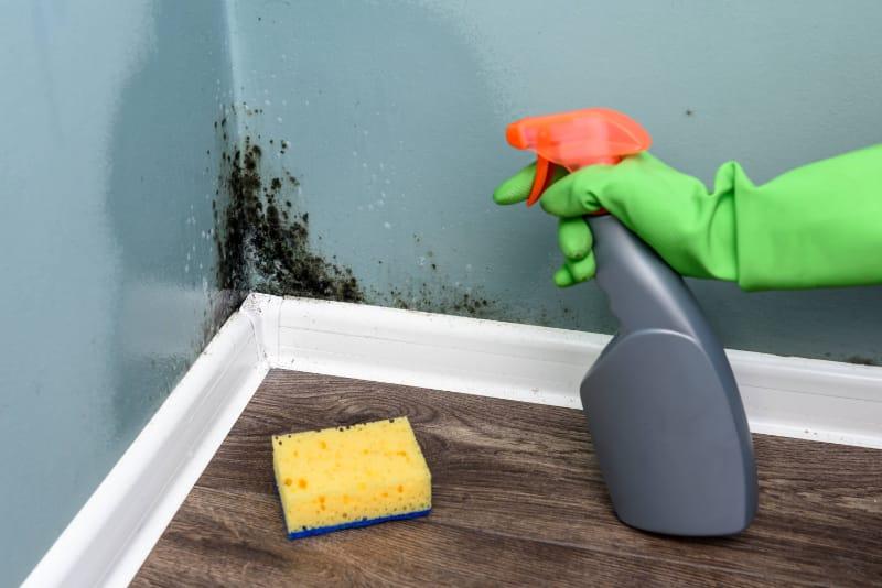 bersihkan tembok dari kotoran
