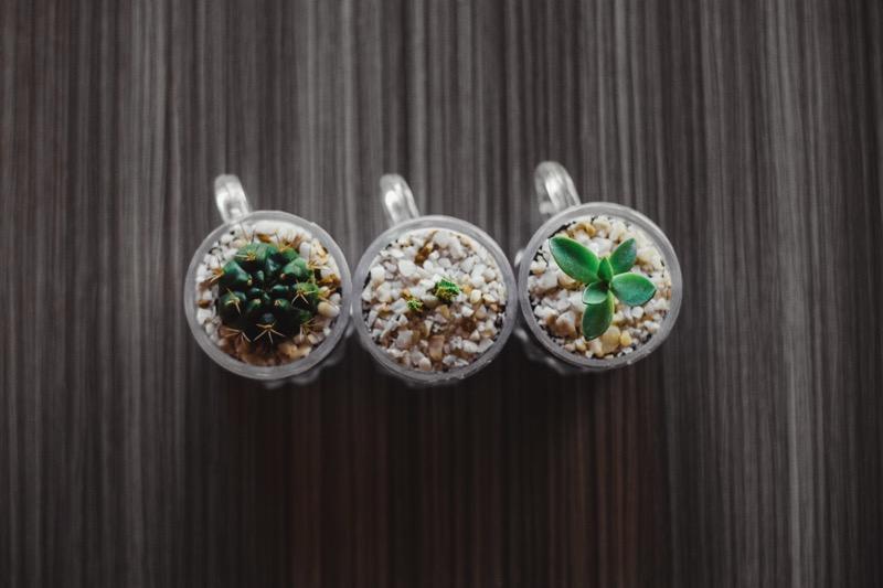 Pot tanaman hias dari gelas