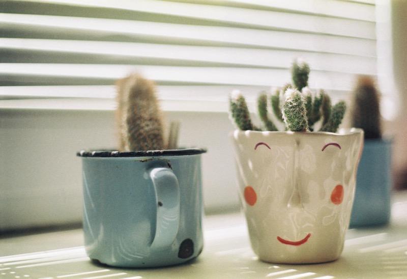 Pot tanaman hias dari mug
