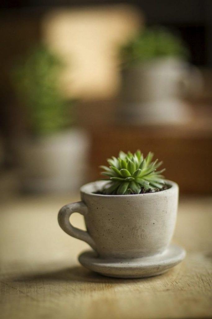 Pot tanaman hias mug