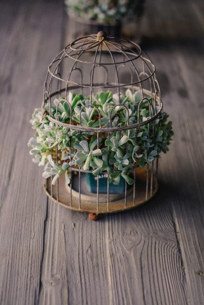 Pot tanaman hias unik