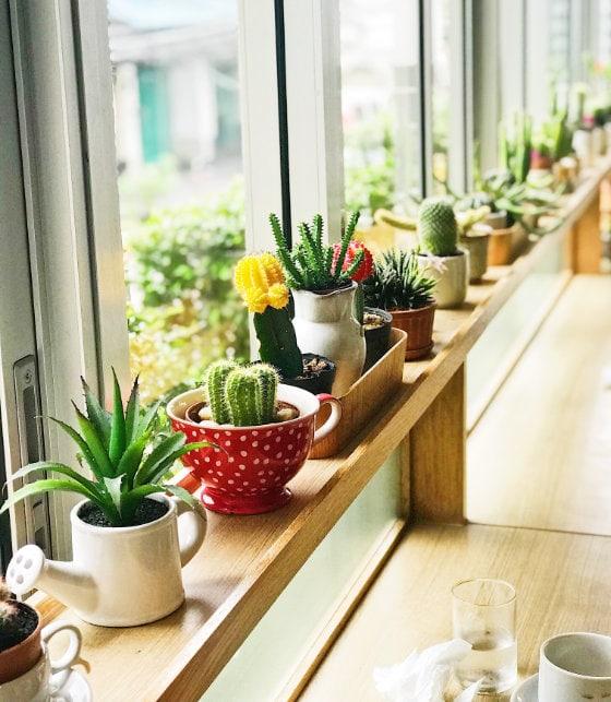 Segarkan Ruangan dengan Tanaman Kaktus
