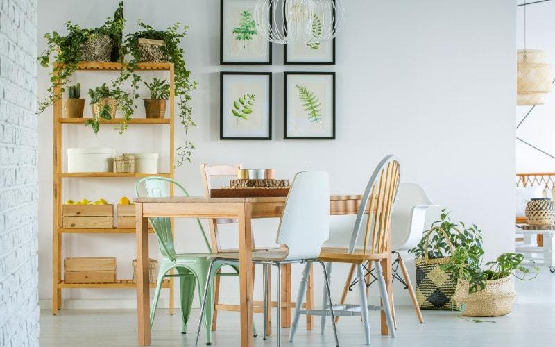 tanaman dekorasi