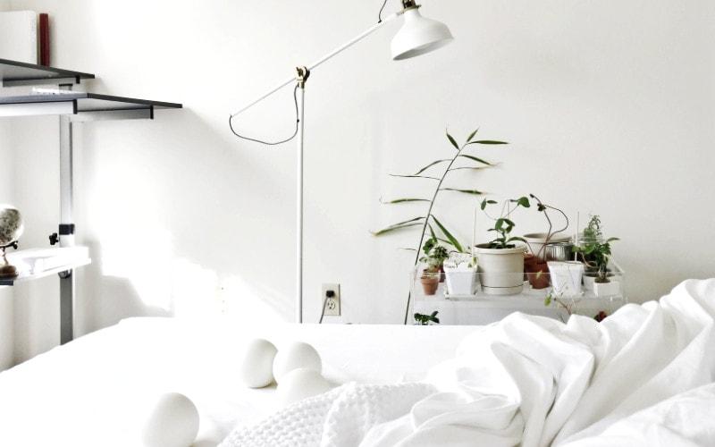 tanaman di dalam kamar