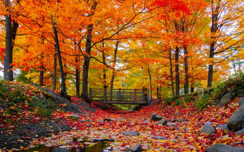 keindahan warna alam