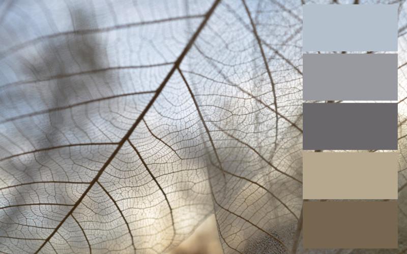 skema warna abu-abu coklat
