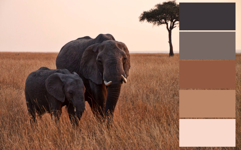 skema warna alam afrika