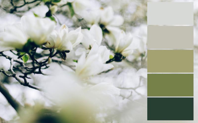 skema warna bunga putih