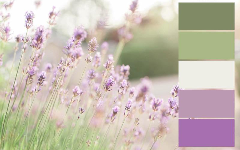 skema warna bunga ungu