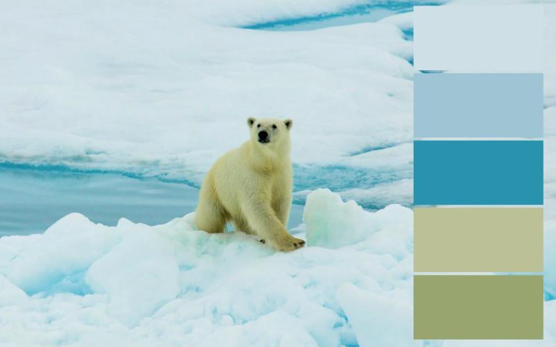 skema warna dingin